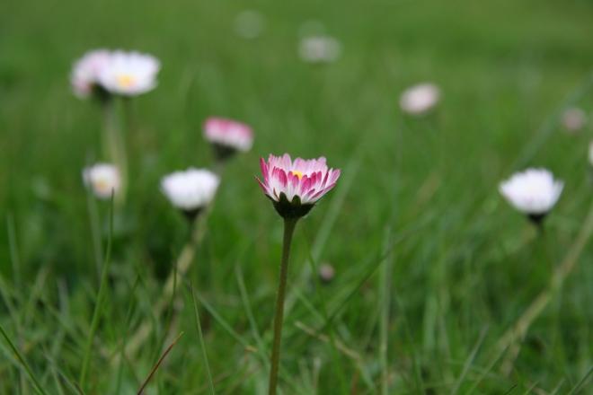 Frühling I