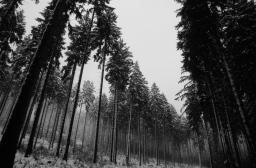 Winterwald 4