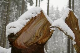 Winterwald 6