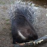 Zoo Osnabrück 6