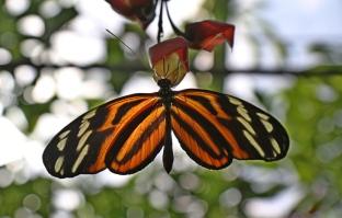Botanischer Garten Juni 03