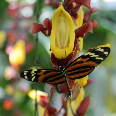 Botanischer Garten Juni 06