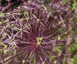 Botanischer Garten Juni 12