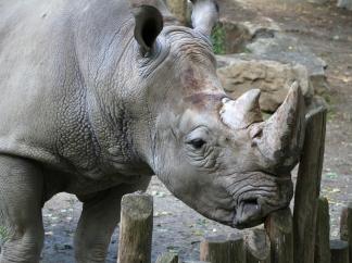 Zoo Osnabrück Juli 2015_04