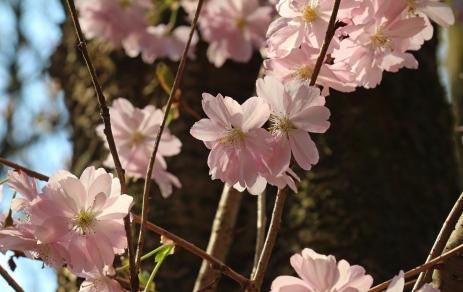 April Blüten 2016-3