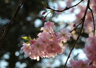 April Blüten 2016-4