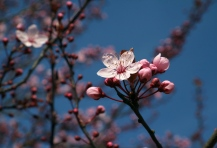 Botanischer_Garten_Osnabrueck_maerz_2017_3